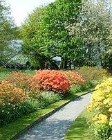 Azaleas Garden