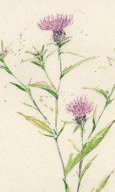 sally bamber flower image comp